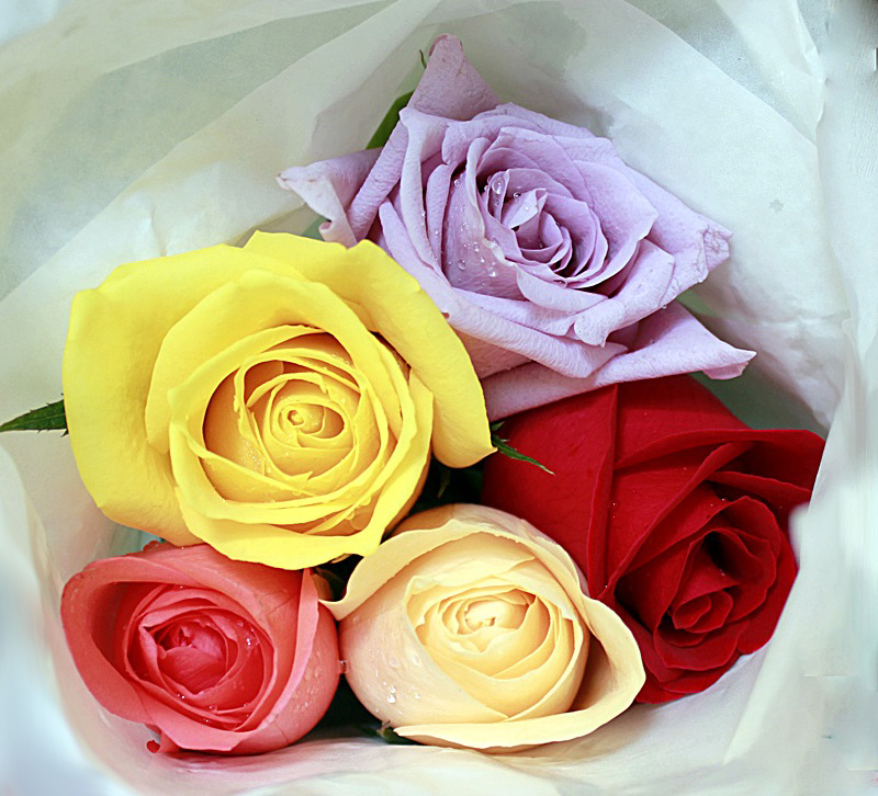 Roses for you 2